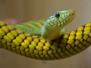800px-Green,_yellow_snake