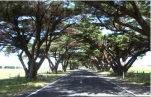 The road to Seaspray