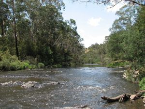 The Yarra River at Wonga Park, Victoria, Australia by Melburnian