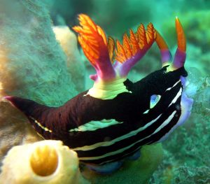 nudibranch-881409-m