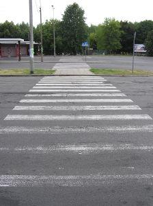 zebra-503145-m