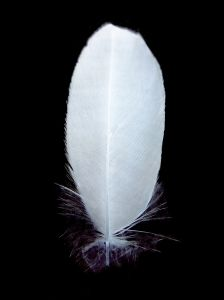 feather-1-625562-m