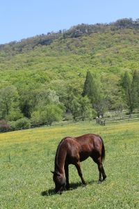 horse-in-field-2-1420173-m