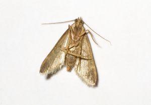 moth-186593-m